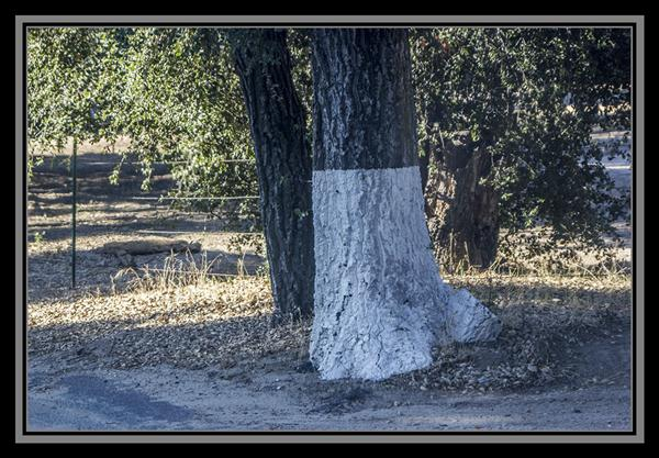 Painted tree trunk, State Route 94, San Diego County, California
