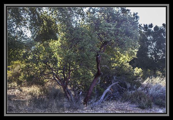 Manzanita, State Route 94, San Diego County, California