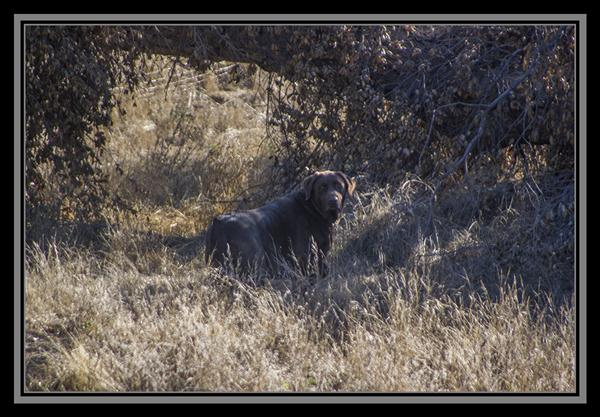 Wild dog, State Route 94, San Diego County, California