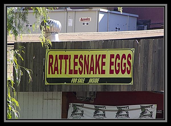 Rattlesnake eggs for sale inside