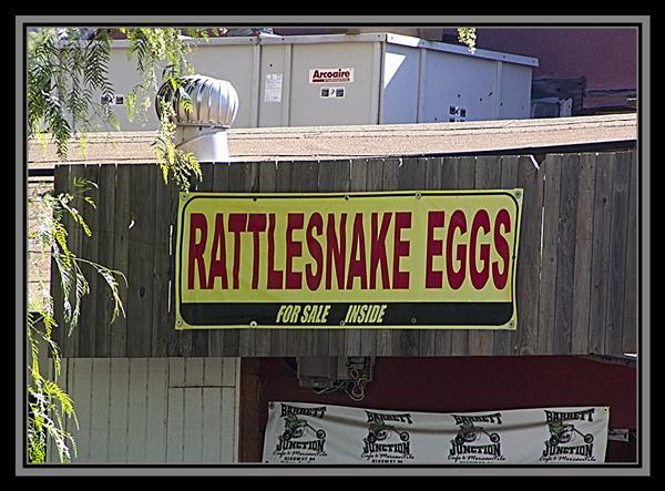 Rattlesnake eggs for sale inside
