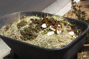 Poop in a wheelbarrow