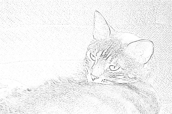 Zoey the Cool Cat using a Photoshop CS6 filter