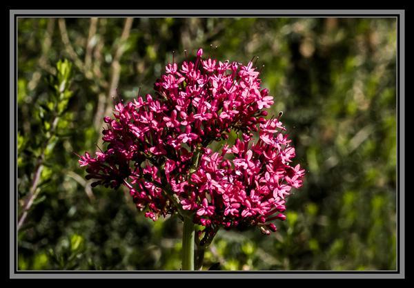 Friday Flower Fiesta, October 12, 2012