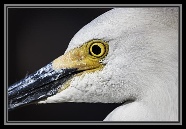 Egret at SeaWorld San Diego