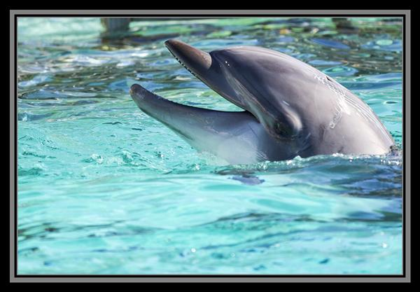 Dolphin at SeaWorld San Diego