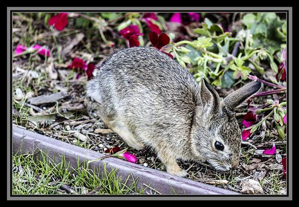 Rabbit at SeaWorld San Diego