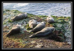Seals and sea lions at La Jolla Cove, La Jolla, California