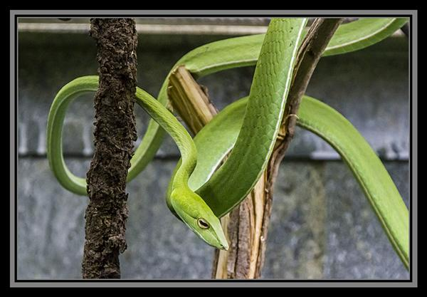 Reptile House, San Diego Zoo