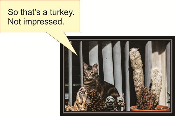 So that's a turkey. Not impressed.