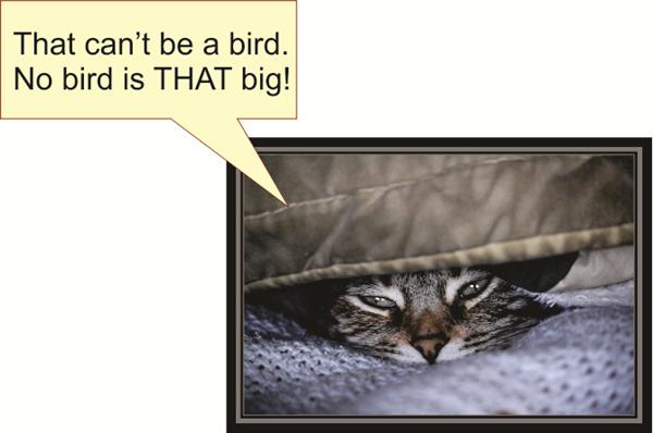 That can't be a bird. No bird is THAT big!
