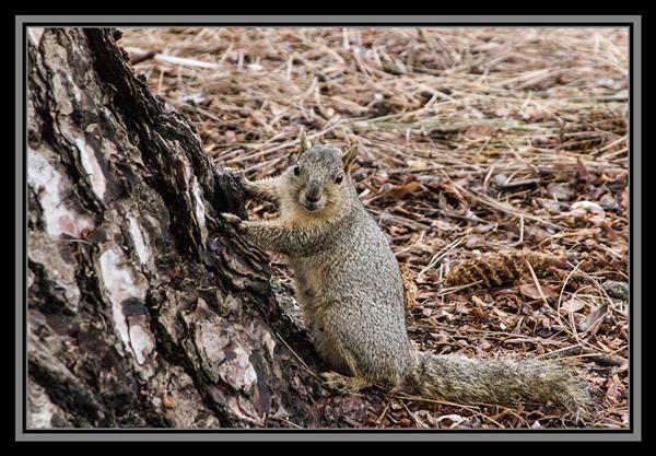 Thanksgiving squirrel