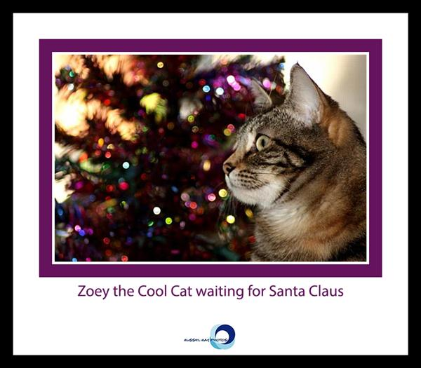 Zoey the Cool Cat waiting for Santa Claus
