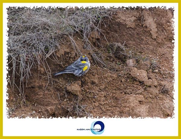 Bird in the San Diego National Wildlife Refuge