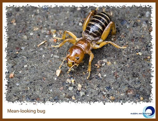 Mean-looking bug