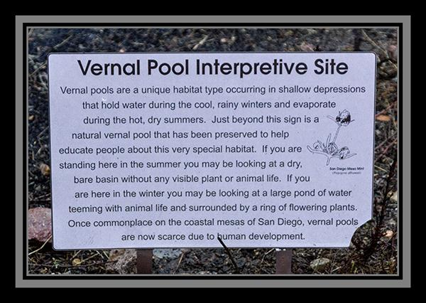 Vernal pool interpretive site