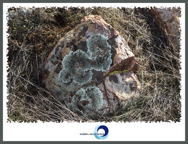 Lichen-covered rock in the San Diego National Wildlife Refuge