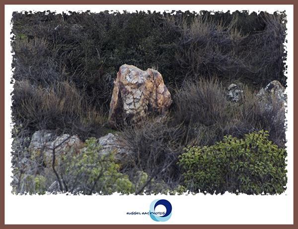 Ramshead rock in the San Diego National Wildlife Refuge