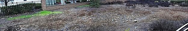 Vernal pool panorama