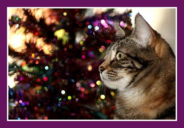 Zoey the Cool Cat and Christmas tree
