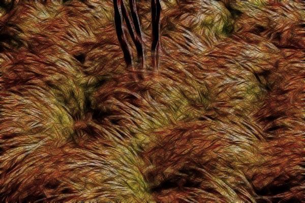 Field of grasses
