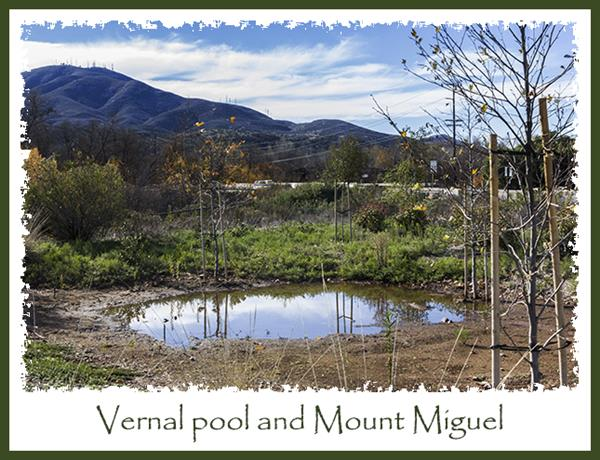 Vernal pool and Mount Miguel