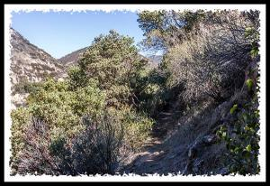 Pine Creek Wilderness in Cleveland National Forest