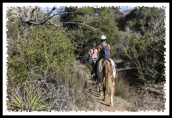 Horses in Cleveland National Forest