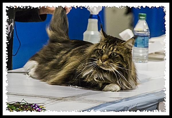 Food & Water Bowl XXI, San Diego Cat Fanciers