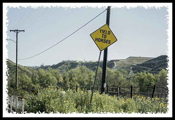 Yield to horses