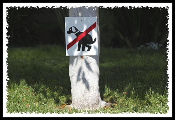 No dogs pooping