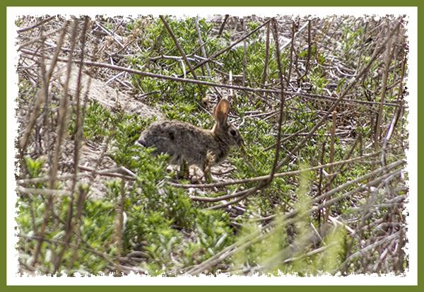 Rabbit, South Bay Freeway, San Diego