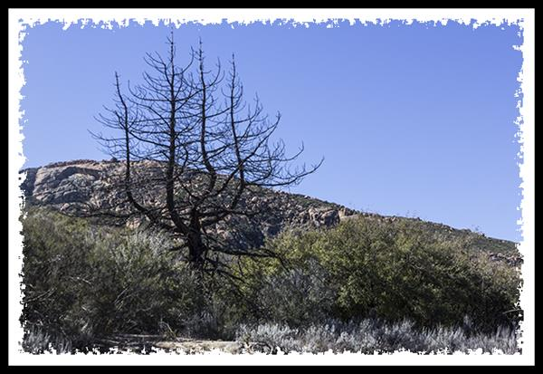 Lake Morena County Park in Cleveland National Forest
