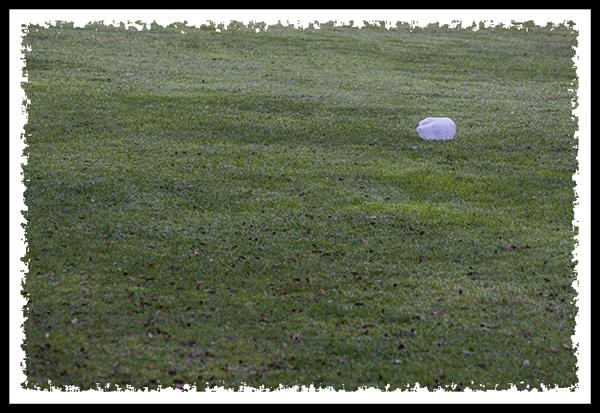 Plastic jug on grass