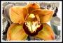 Friday Flower Fiesta (3/15/13) — Imperfect orchids