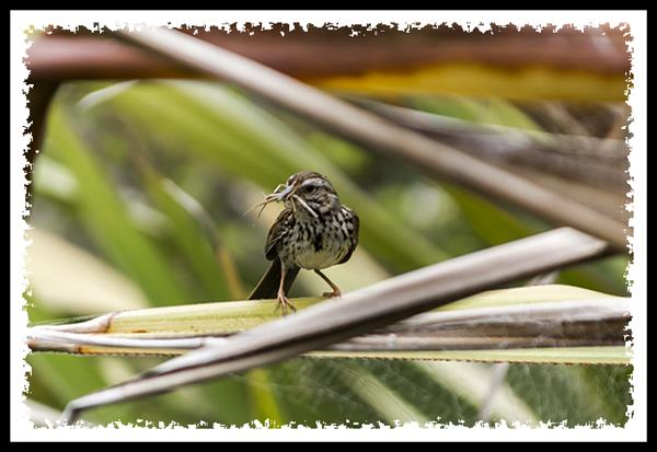 Nestbuilding Bird