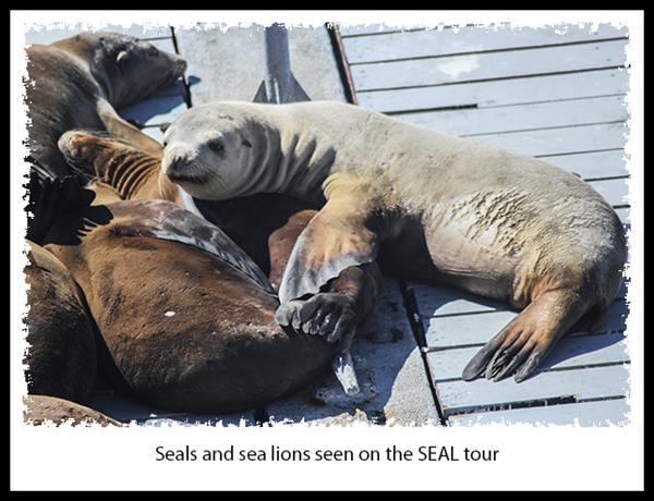 Seals and sea lions seen on the SEAL tour