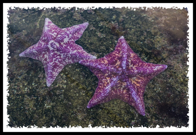 Starfish at SeaWorld San Diego