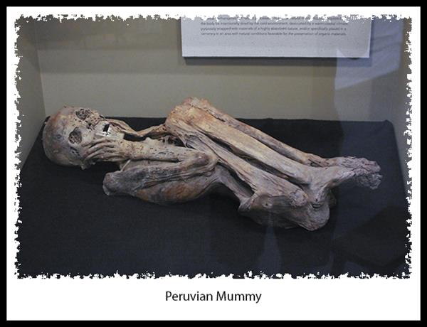 Peruvian mummy at the San Diego Museum of Man