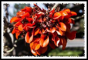 Friday Flower Fiesta 4-5-13