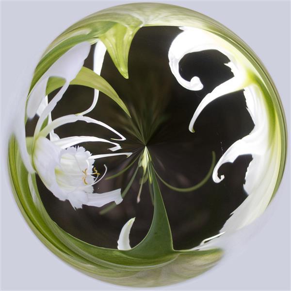 Flower orb