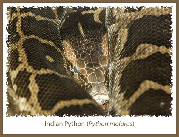 how to avoid snake in house india