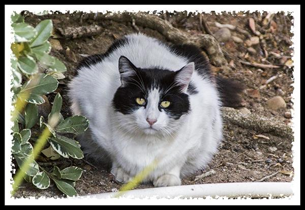 Beautiful feral cat