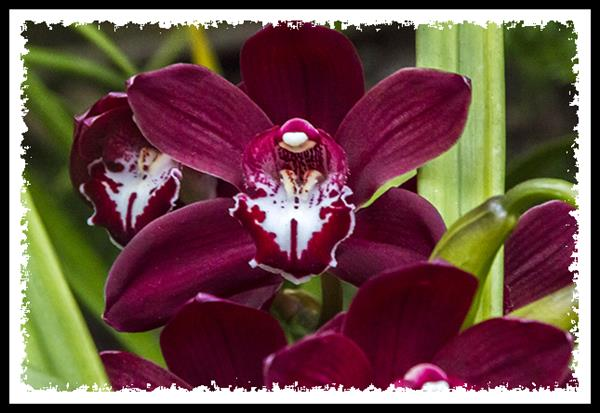 Orchid at the San Diego Zoo