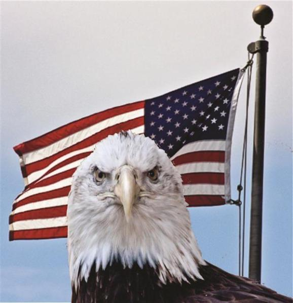 Eagle and United States flag