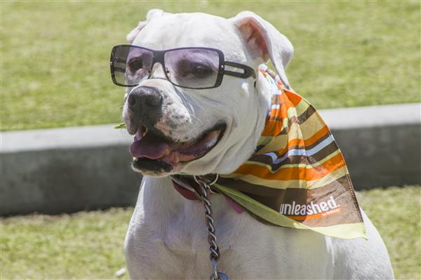 Imperial Beach Surf Dog Competition