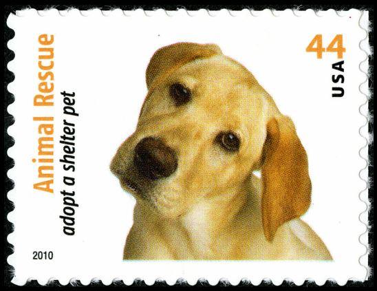Scott #4454 Adopt a shelter pet