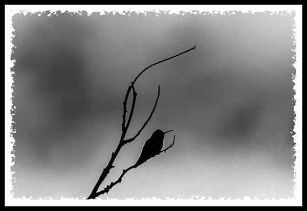 Hummingbird and storm clouds