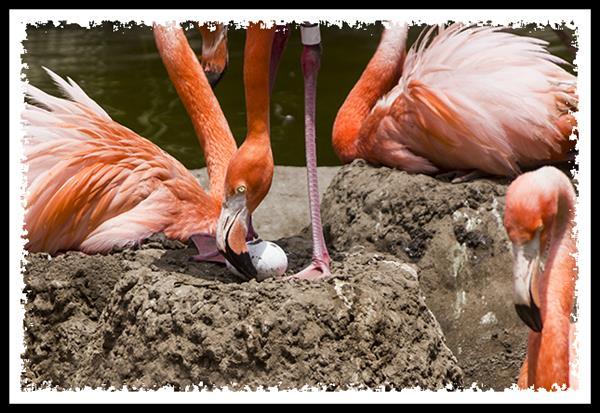 Flamingo egg at the San Diego Zoo