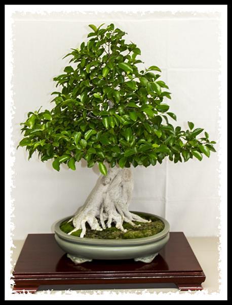 Bonsai at Los Angeles County Arboretum & Botanical Garden